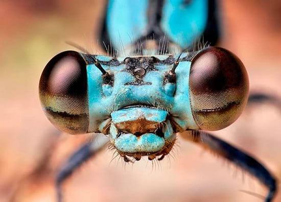 کلوزآپ حشرات (11)