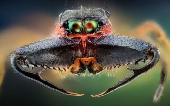 کلوزآپ حشرات (12)