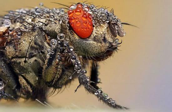 کلوزآپ حشرات (13)