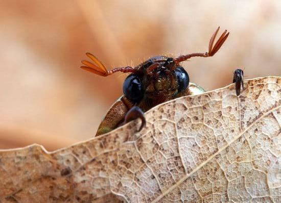 کلوزآپ حشرات (14)