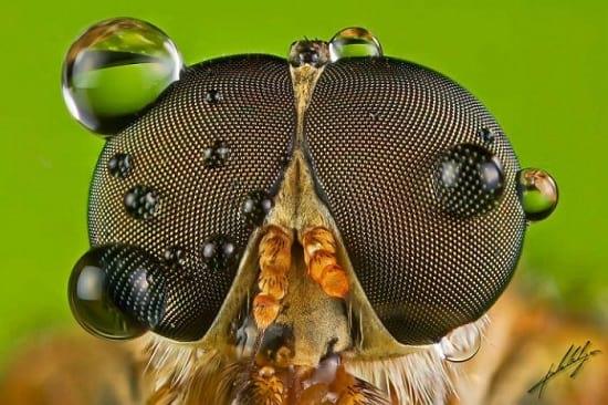 کلوزآپ حشرات (17)