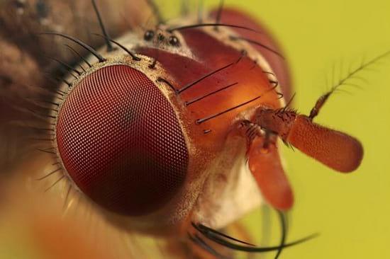کلوزآپ حشرات (18)