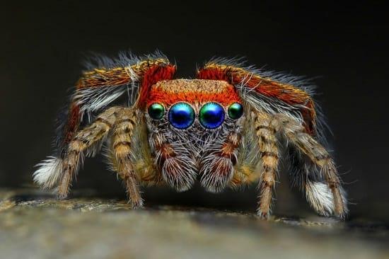 کلوزآپ حشرات (19)