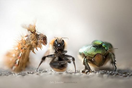 کلوزآپ حشرات (2)