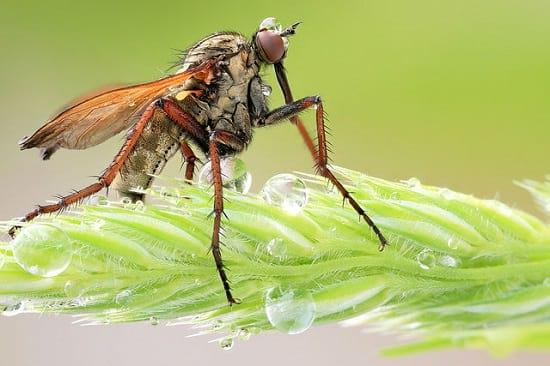 کلوزآپ حشرات (22)
