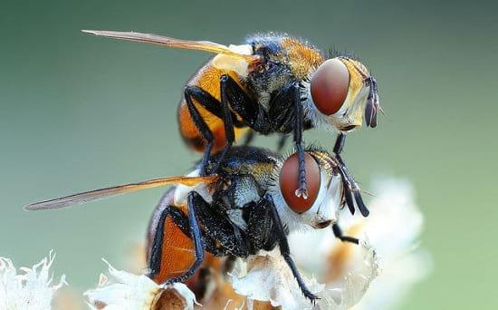 کلوزآپ حشرات (23)