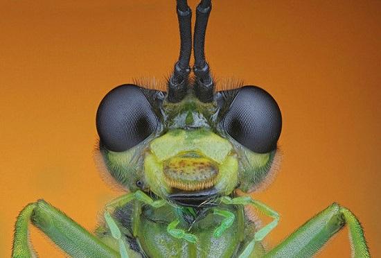 کلوزآپ حشرات (26)