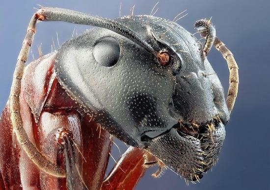 کلوزآپ حشرات (5)