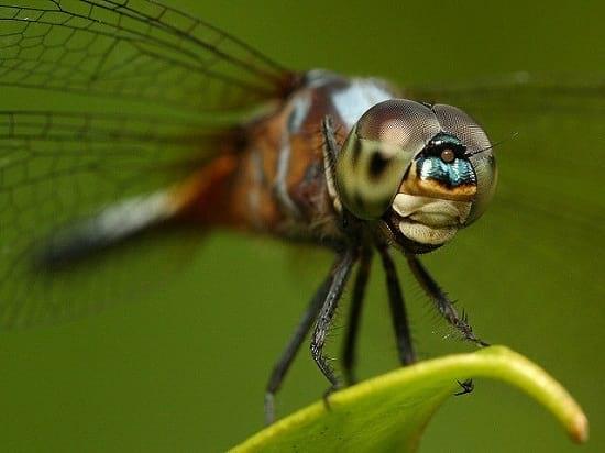 کلوزآپ حشرات (8)