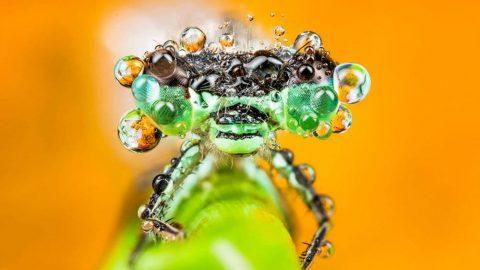 تصاویری از قطرات آب روی بدن حشرات