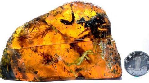 کشف یک نوزاد پرنده ۱۰۰ میلیون ساله کامل در سنگ کهربا