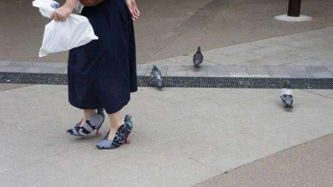 کفش هایی به شکل کبوتر