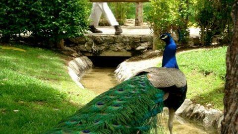 باغ پرندگان اصفهان، قلب تپنده ناژوان(۷)