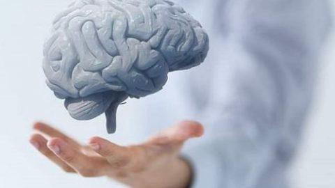 گیاهانی که بیش ترین تاثیر را روی سلامت مغز دارند!