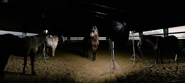 عکاسی از حیوانات (10)