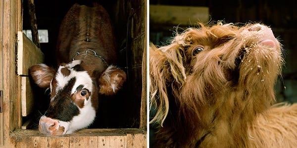 عکاسی از حیوانات (14)