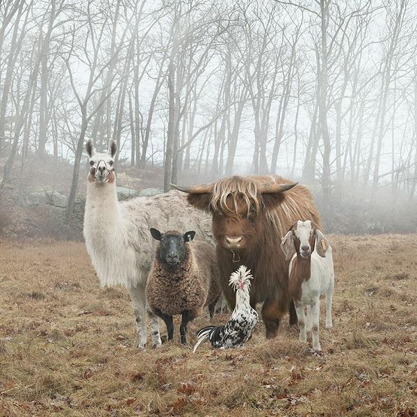 عکاسی از حیوانات (4)