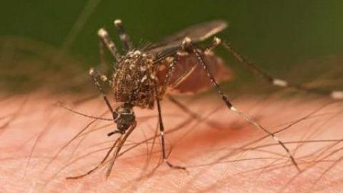 چرا پشهها بعضیها را بیش تر نیش میزنند؟