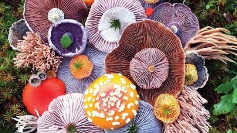 قارچهای اسرارآمیز
