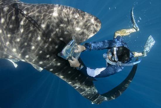 کوسه نهنگ (2)
