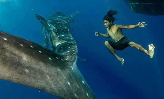 کوسه نهنگ (6)