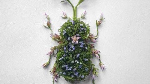 گل هایی که تبدیل به حشره شدند