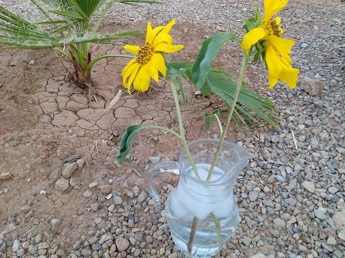 بحران آب (3)