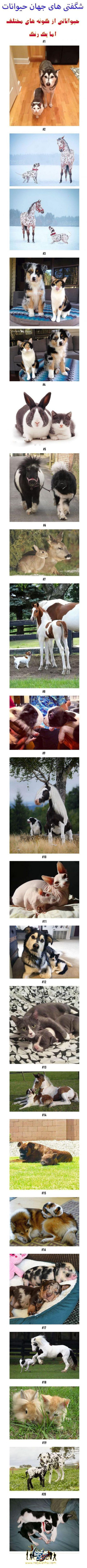 شگفتی های جهان حیوانات!