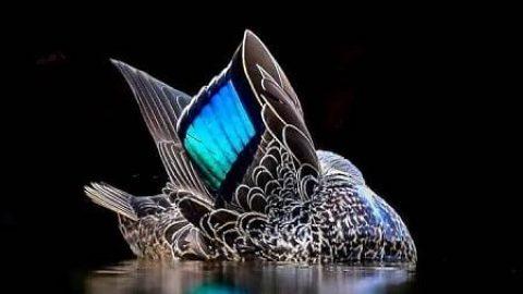 برندگان خیره کننده مسابقه عکاسی از پرندگان سال ۲۰۱۷