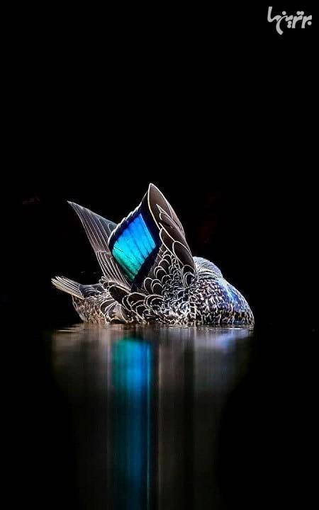 عکاسی از پرندگان (1)