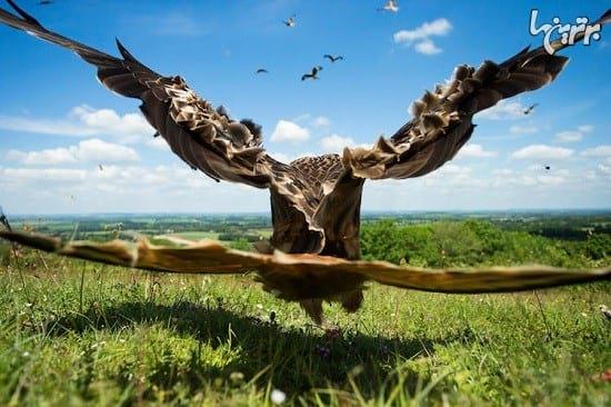 عکاسی از پرندگان (10)