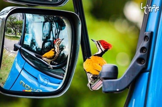 عکاسی از پرندگان (13)