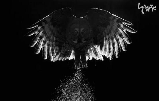 عکاسی از پرندگان (14)