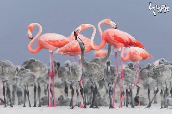 عکاسی از پرندگان (2)