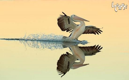 عکاسی از پرندگان (3)
