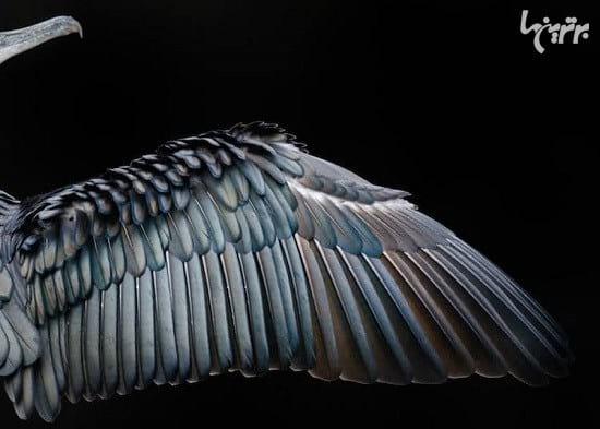 عکاسی از پرندگان (4)