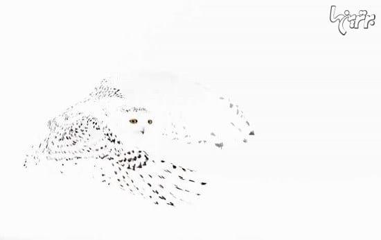 عکاسی از پرندگان (5)
