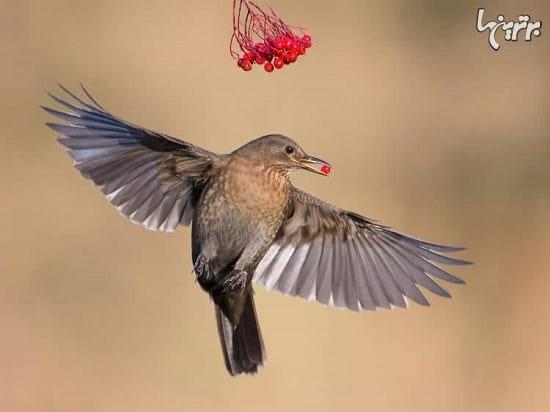 عکاسی از پرندگان (6)
