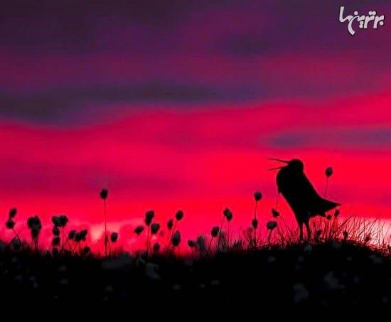 عکاسی از پرندگان (7)