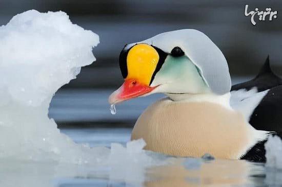 عکاسی از پرندگان (8)