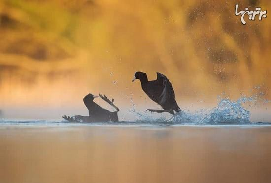 عکاسی از پرندگان (9)