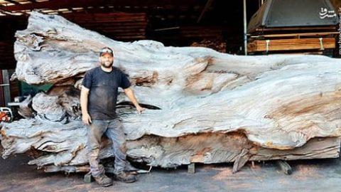 مجسمهسازی با کُنده درخت!