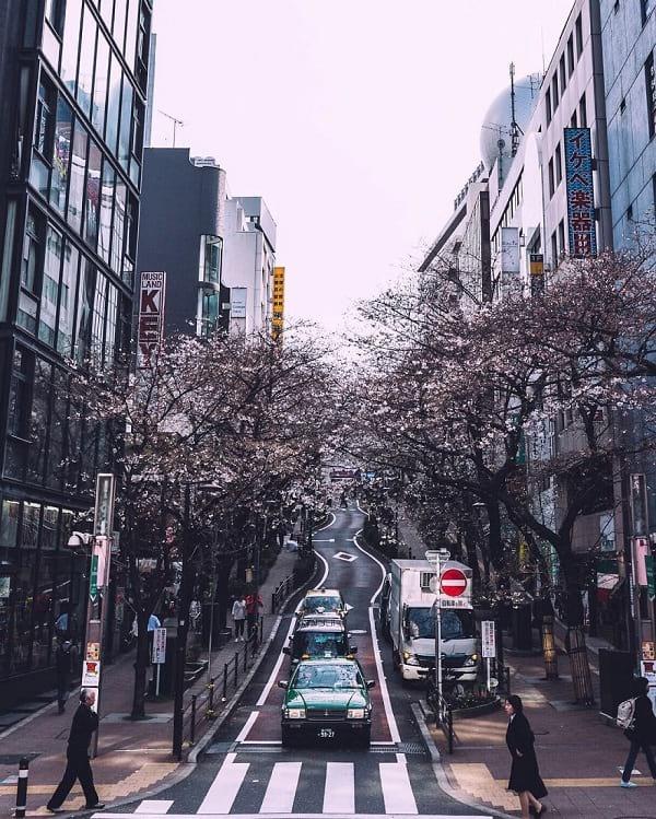 ژاپن واقعی (7)
