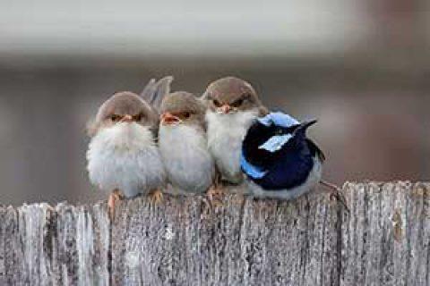 تصاویر زیبا از مهر مادری در پرندگان