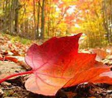 شعرفرش پاییز