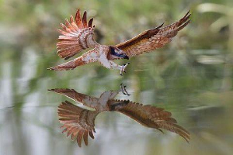 پرنده های مینیاتوری کاغذی
