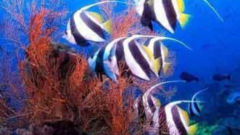 آموزش عکاسی؛ عکاسی زیر آب