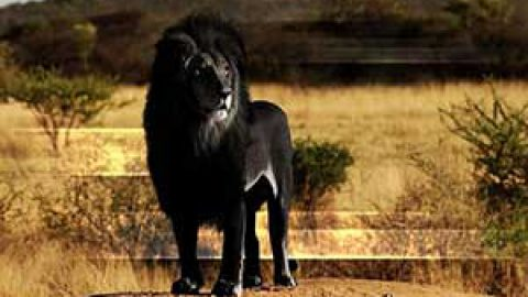 حیوانات کاملا سیاه