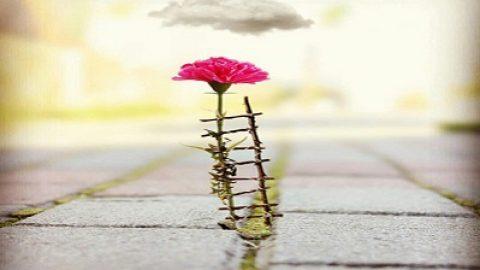 چطور می تونم زندگی پاک و سالمی داشته باشم؟