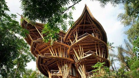 خانه های رویایی با چوب بامبو | دکوراسیون با نی بامبو
